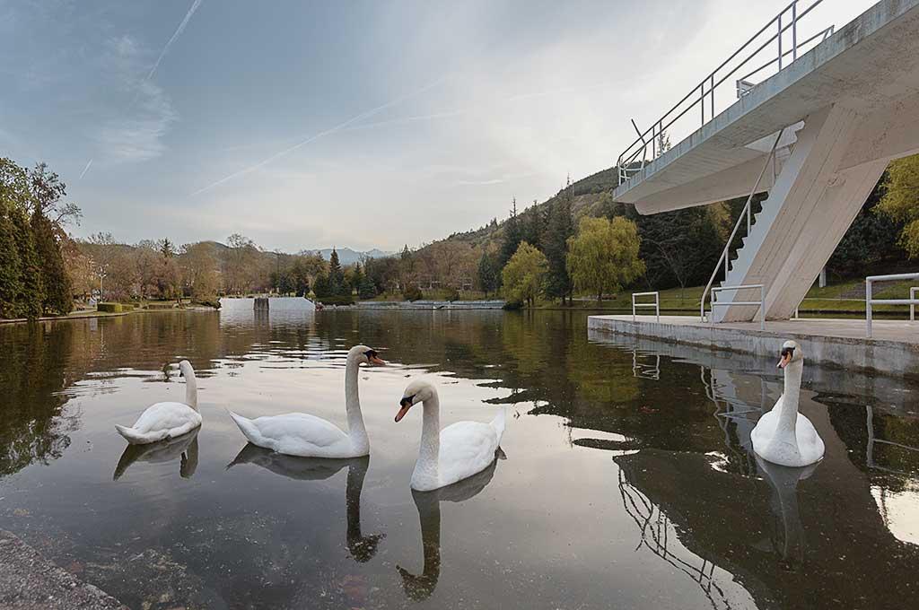 Екзотични птици в езерото и парка на курортен град Сандански